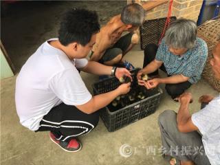 平果县:司法干警为脱贫户送鸭苗促增收