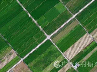 融安县:初夏田园绿如翠