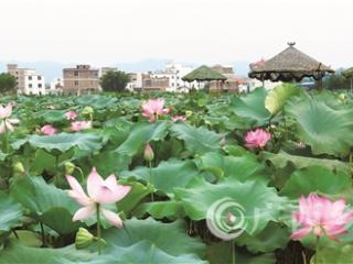 平桂区:依托产业和景区两大平台发展乡村旅游 助力乡村振兴