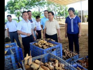 自治区政府参事调研组到平桂区调研乡村产业发展工作