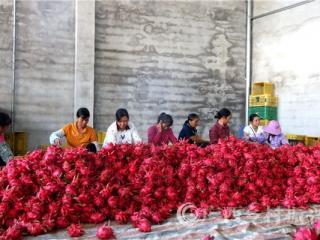 恭城县:科技助农增收