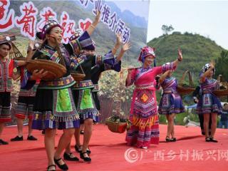 罗城县:举办2018年罗城野生毛葡萄产业推介活动助力产业扶贫