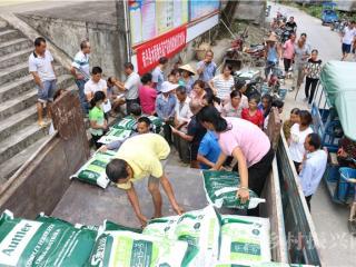南丹县:因地制宜发展再生稻  促进粮食持续增产增收