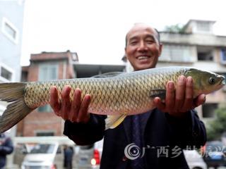 融安县:暖心赠送河边鱼   感恩回馈扶贫人