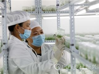 融安县:科技育苗助力脱贫