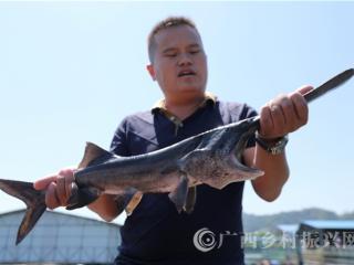 融安县:网箱水产养殖助脱贫