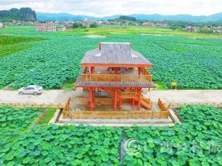 平桂区:发展莲藕特色产业助力乡村振兴和脱贫攻坚侧记