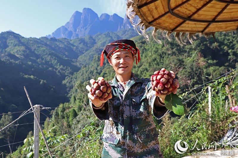 村民展示采收的果实(罗海涛/摄)