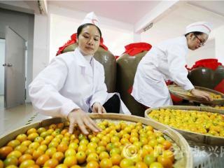 融安县:金桔酿酒 助力脱贫