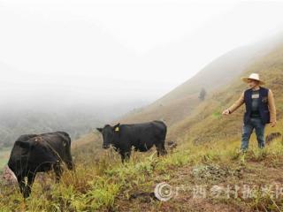 平乐县:高山牧场养牛助增收