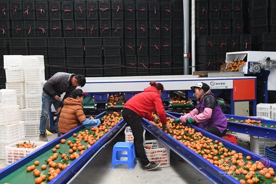 罗城小长安镇民族村以产业兴旺引领振兴乡村
