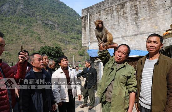 大化百力山猕猴观光旅游扶贫项目开工