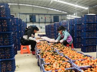 罗城县:农民专业让贫困妇女实现家门口就业