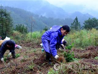平桂区:茶园面积突破3万亩  茶产业发展初见成效
