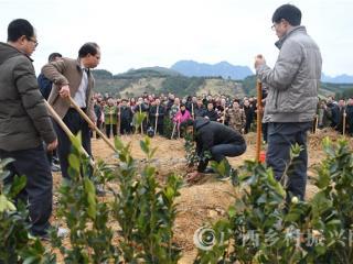 罗城县:节后上班首日种植油茶忙
