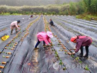 南丹县:稳步发展中药材 拓宽群众致富路
