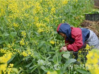 罗城县:粮食播种面积达38.2万亩以上