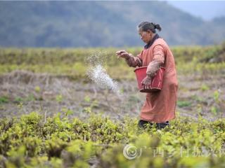 罗城县:种桑养蚕助农增收5亿元