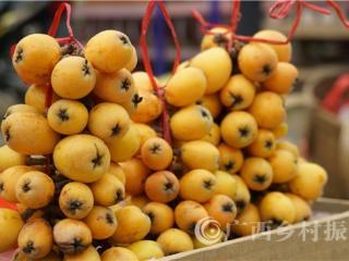 凌云县:经济作物大果枇杷成熟上市