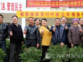 融安县:香杉树苗送群众 助力脱贫奔小康