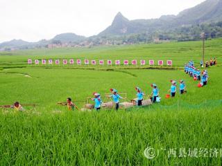 南丹县:特色生态农业助推乡村振兴