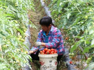 """南丹县:""""菜篮子""""项目促增收助脱贫"""