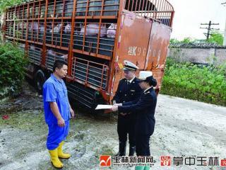 玉林市供港活猪今年逆势大幅增长