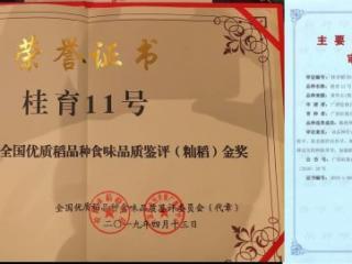 """""""桂育11号""""荣列第二届全国优质稻品种食味品质鉴评活动金奖榜首"""