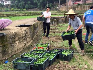 长洲区:发展百香果种植推进产业扶贫
