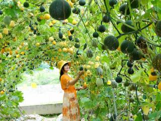"""南宁举办""""田地里的博览会"""" 吸引多国展商前来""""看菜选种"""""""