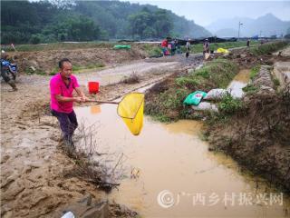平果县四塘镇:特色农业受灾损失严重 全力开展灾后生产自救工作