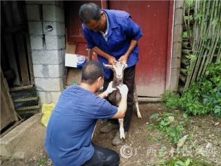 南丹县:加强春季重大动物疫病防控检查验收工作