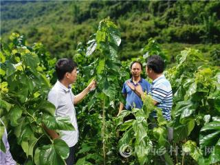 平果县安坤村:自治区科技特派员进驻贫困村  科技扶贫助力脱贫攻坚