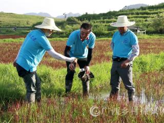 南丹县:农业人再出发  稻田里作画