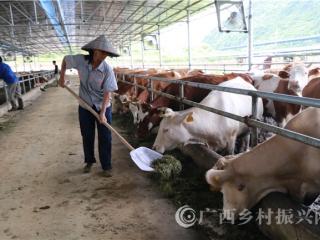 宁明县:大力发展生态肉牛养殖助农增收致富