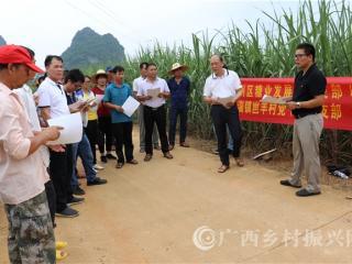 江州区濑湍镇:甘蔗病虫害综合技术培训到地头