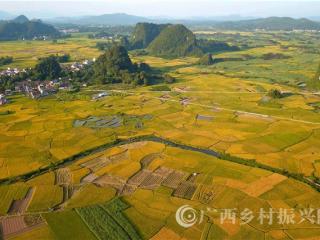 罗城县双蒙村:富硒水稻成熟田园如画