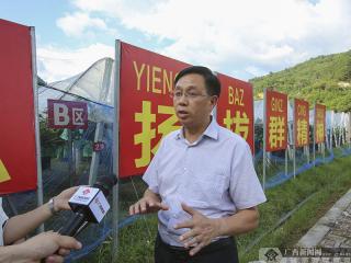 """东兰县:红色引领绿色崛起 """"走活""""产业致富路"""