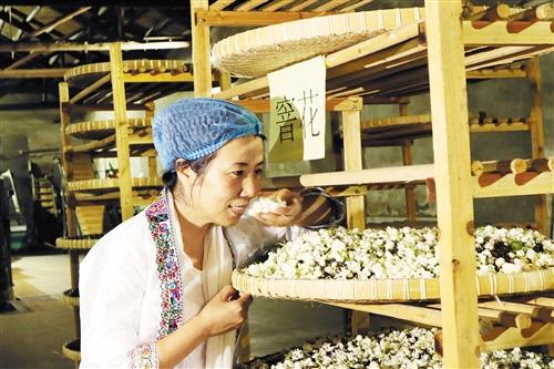 横县:不断拓宽茉莉花产业发展渠道