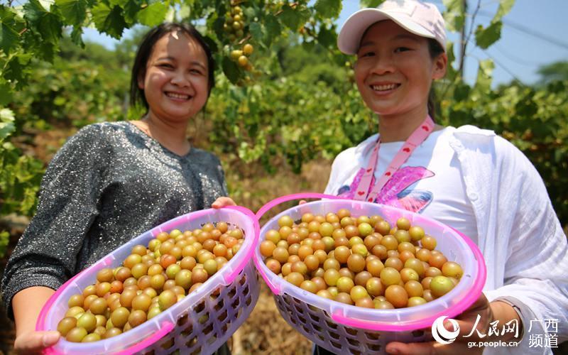 8月10日,在大苗山广西融水苗族自治县和睦镇和睦村下木村屯,两名游人在展示刚采摘的圆叶葡萄