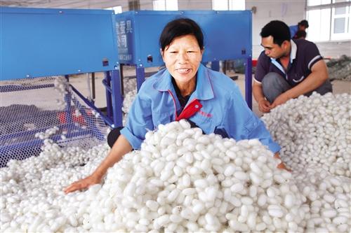 邕宁区:产业扶贫显成效