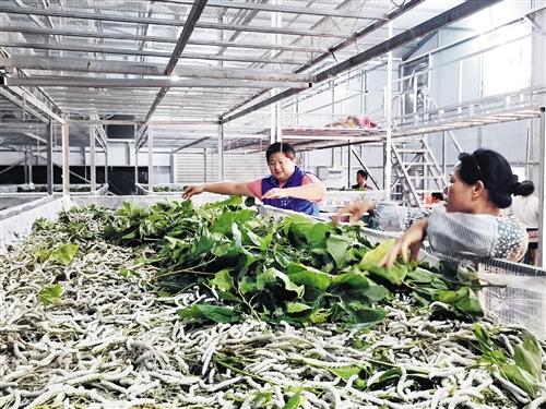 横县:以扶贫产业推动脱贫攻坚深入发展