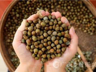融安县:种植芡实助脱贫
