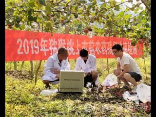 南丹:红心猕猴桃将于8月15日采摘上市