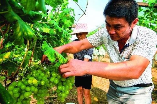 全州才湾:红军精神激励描绘乡村振兴美好画卷