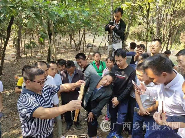 西林县:举办蜜蜂养殖壮大村集体经济培训班