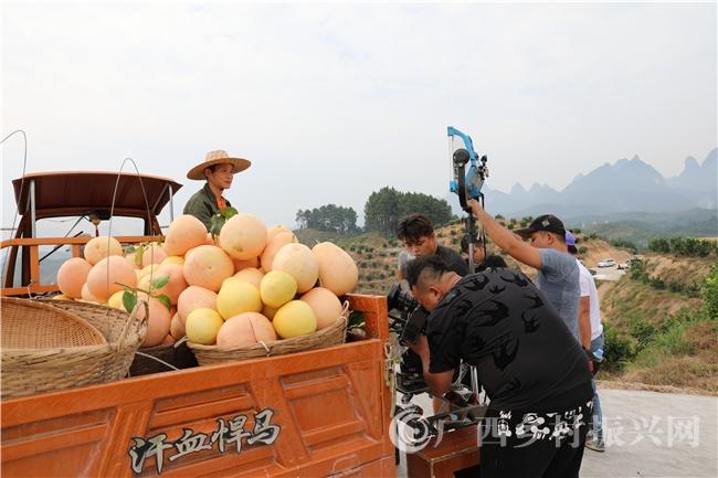 """央视""""环江红心香柚""""公益广告在环江开拍"""