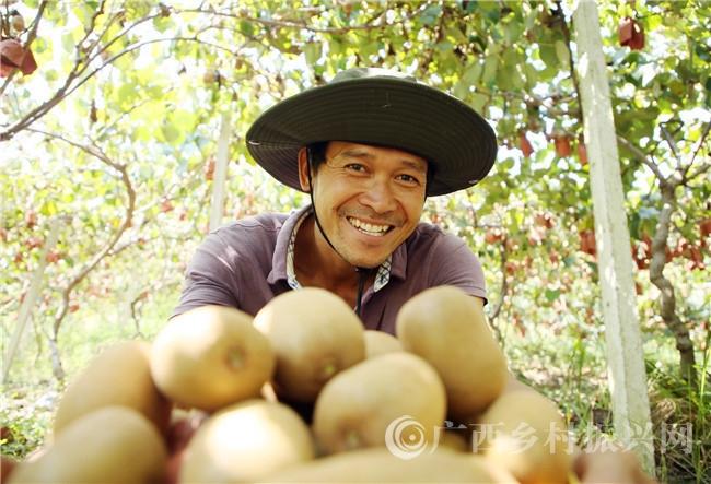 """小小猕猴桃 结出""""致富果"""" ——融安县推进特色水果产业助脱贫侧记"""
