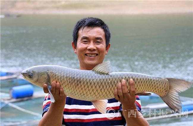 融安县:刘文香的养鱼脱贫路