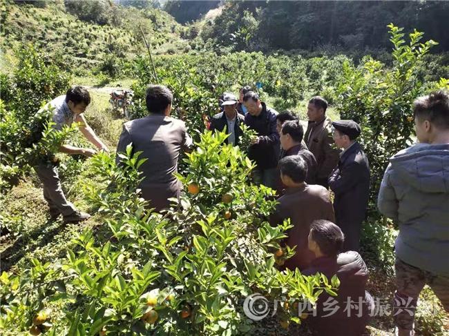 乐业县同乐镇:以种植技术培训为抓手 助力贫困户增收脱贫